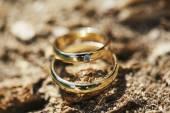 Wedding rings on tree bark — Stock Photo