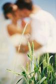 Wedding Outdoors — Stock Photo