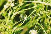 Soap bubble on a grass — Stock Photo