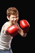 Boxer rétrécie — Photo