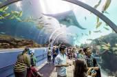 Interior of Georgia Aquarium with the people — Stock Photo