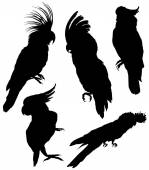 Silhouettes of Birds -  big set — Stock Vector