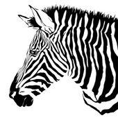 斑马黑色和白色 — 图库矢量图片