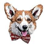 Funny Pembroke Welsh corgi dog. — Stock Vector #67084135