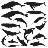 Whale Silhouettes set — Stock Vector