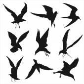 Silhouettes of Birds -  big set — Stock Vector