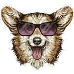Funny Pembroke Welsh corgi dog. — Stock Vector #70391767