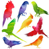Parrot Silhouette set. watercolor illustration — Stock Vector