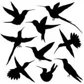 Hummingbirds Silhouette. illustration — Stock Vector