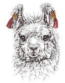 Realistic sketch of LAMA Alpaca — Cтоковый вектор