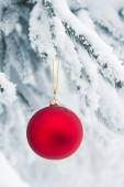Christmas bauble hanging on a snowy tree — Stock Photo