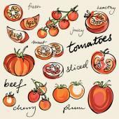 Various tomatoes kinds — Vecteur