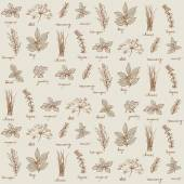 Fresh herbs pattern — Stock Vector
