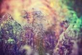 植物的特写镜头 — 图库照片