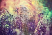 Nahaufnahme der Pflanzen — Stockfoto