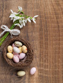 Snowdrop with chocolate egg for easter, selective focus — Stockfoto