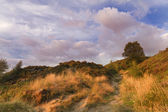 Norland moor at sunset — Stock Photo