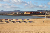 Beach in Fuerteventura — Stock Photo