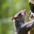 Squirrel climbing a tree — Stock Photo #53267113