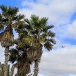 Airplane flying over tropical palm trees — Stock Photo #64664161