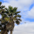 Airplane flying over tropical palm trees — Stock Photo #70972179