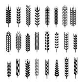 Wheat ear icon set, graphic design elements, black isolated on white background, vector illustration. — Stock Vector