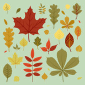 Fall leaves collection. — Vector de stock