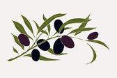 Olive branch with olives — Stock Vector