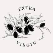 Olive branch. Extra Virgin — Stock Vector