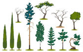 Evergreens and trees — Stock Vector