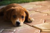 Ledsen liten hund — Stockfoto