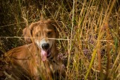 Dog in the field. — Stock Photo