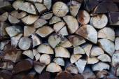 Tree stumps background — Stock Photo