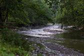 A slow moving stream — Stok fotoğraf