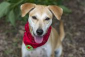 Happy cute dog — Stock Photo