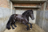 Powerful Stallion horse — Stock Photo