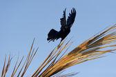 Ruh mistik büyü kuş — Stok fotoğraf