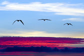 Birds Silhouette Flying — Stock Photo