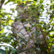 Spider web with spider. — Stock Photo #52481795