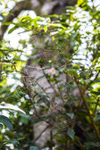 Spider web with spider. — Stock Photo