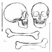 Human skull and bones — Stock Vector