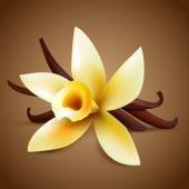 Realistic vanilla flower — Stock Vector