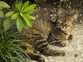 Cat lying in the street — Stock Photo