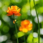 Flowers, grass — Stock Photo