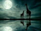 Silhouettes of two giraffes against African moonlight skyline — Stock Photo