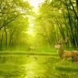 Two deers with stag horns in forest — Stock Photo #57595449