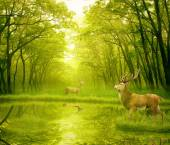 Two deers with stag horns in forest  — Stock Photo