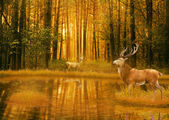 Deer Bucks in summer sunset light standing in an opening in woods — Stock Photo