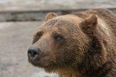 Bear 2 — Stockfoto
