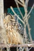 Owl hiding — Stock Photo